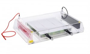 Flatbed IEF system for IEF strips and gels