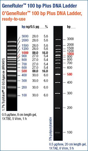 Generuler 100bp Dna Ladder Plus Abo Odczynniki I