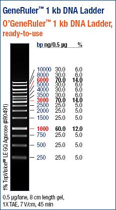 Generuler 1kb Dna Ladder Ready To Use Abo Odczynniki I