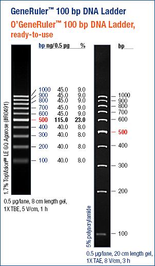 Generuler 100bp Dna Ladder Abo Odczynniki I Wyposażenie